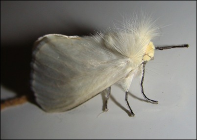 mariposapunk