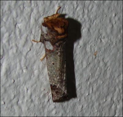 mariposasuja
