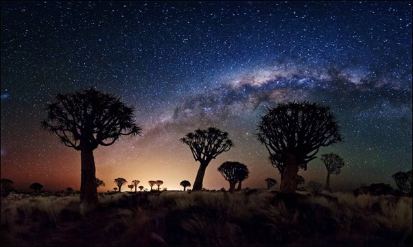milky-way-over-quiver-tree-forest